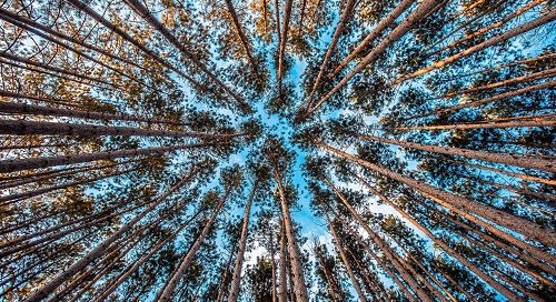 Possibilities - Looking up at sky through trees